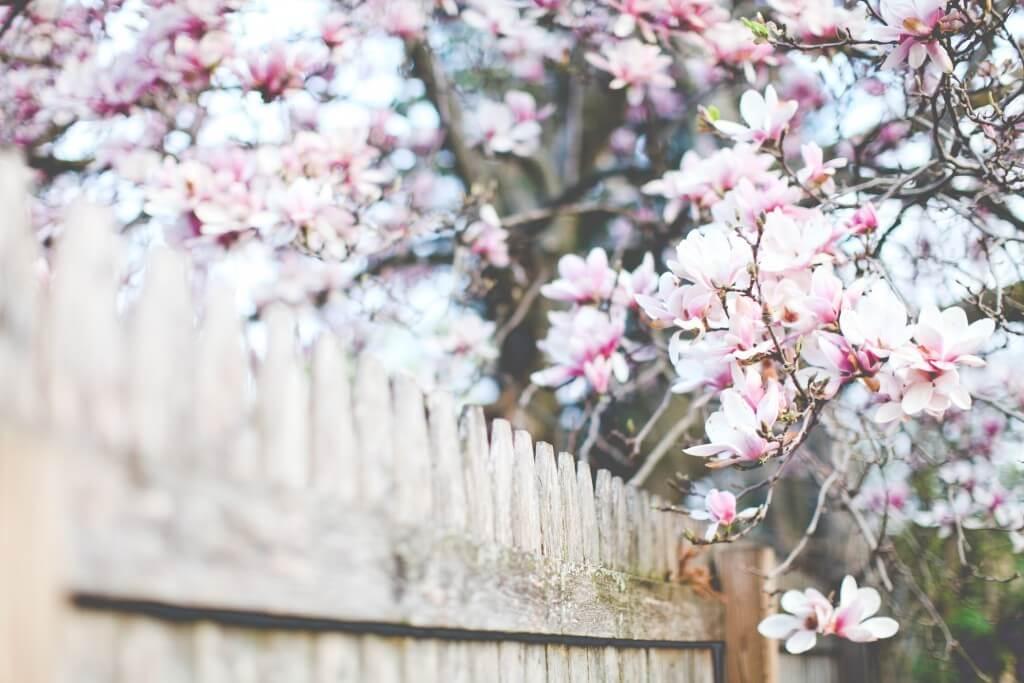 flowers-1-1024x683